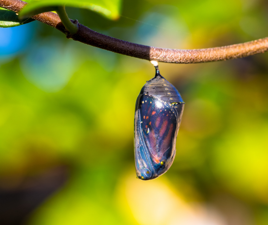 The 8 Empowering Practices to Successfully Deal with Adversity. An image of a butterfly in a cocoon